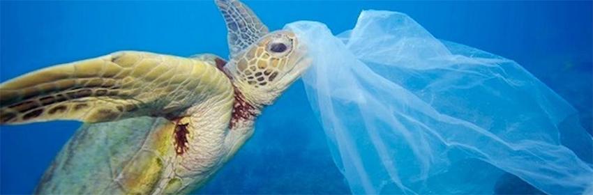 Dia libre de Bolsas de Plástico