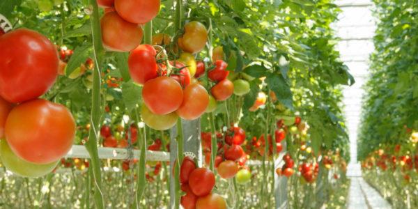 la-tomatina-buñol