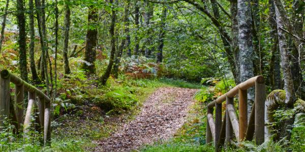 Los bosques más mágicos de España