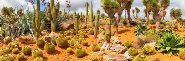 jardín de cactus en Madrid