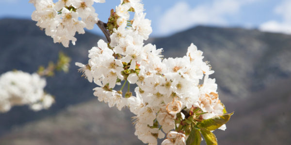 top-destinos-primavera