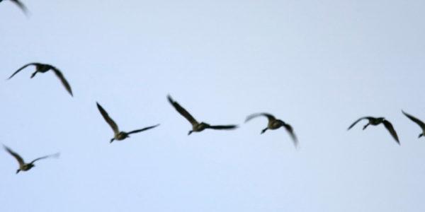 destinos-turismo ornitológico