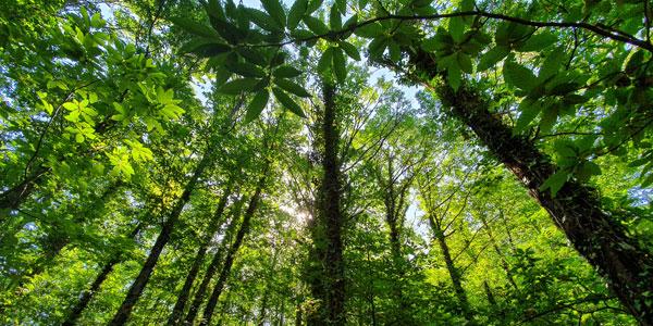 bosques mágicos de España