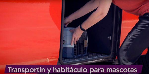 Viajar en bus con tu mascota